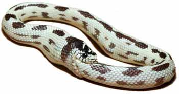 serpentquisemordlaqueue.jpg